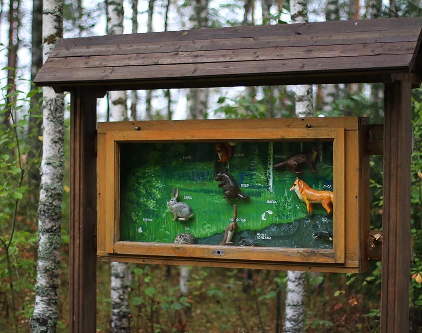 Информационный стенд на экотропе