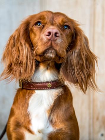 Stanway Dog Collar