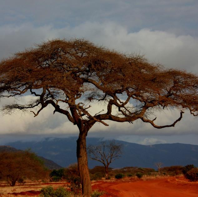 safari-16949_1920 KENYA-45.jpg