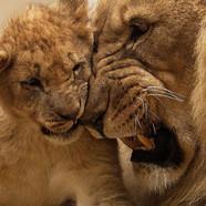 africa-animal-cute-40803-51.jpg