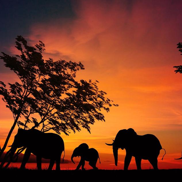 elephant-2231690_1280 KENYA-57.jpg