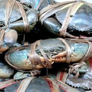 Yummy-Black-Crabs-Krabi1.jpg