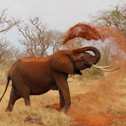 elephant-111695_1280. KENYA-63.jpg