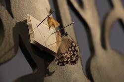 migrantes Museo FAyD Oberá
