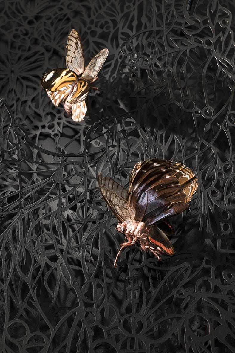 detalle de insectos