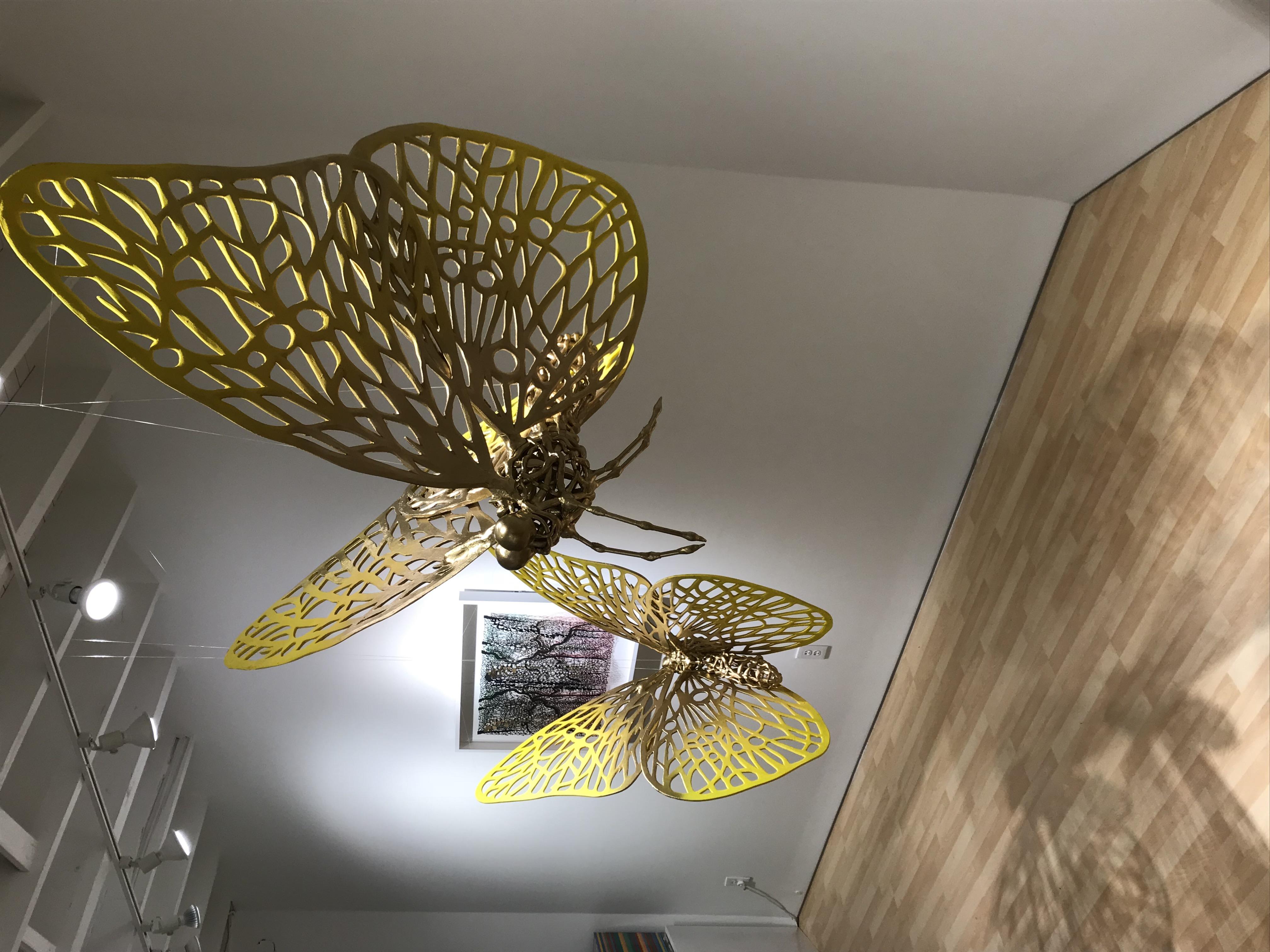 mariposas phoebis