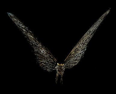 mariposa02.jpg