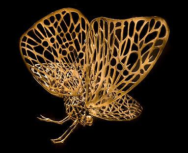 mariposa01.jpg