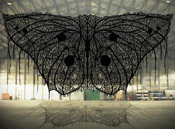 Mariposa en el Hangar