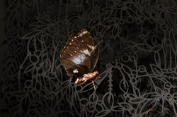 detalle de insecto mutante