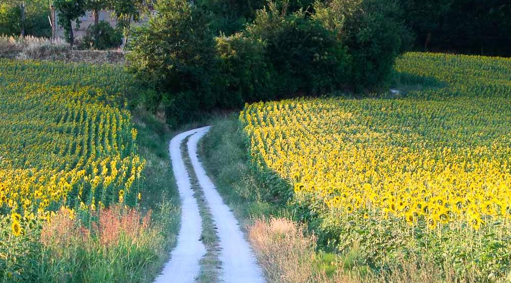 Terre del Lacrima - Marche Rural Tourism