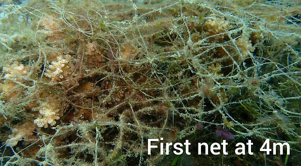 Net recovery from Silver Reef House Reef