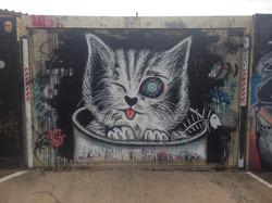 Catsua | Newtown