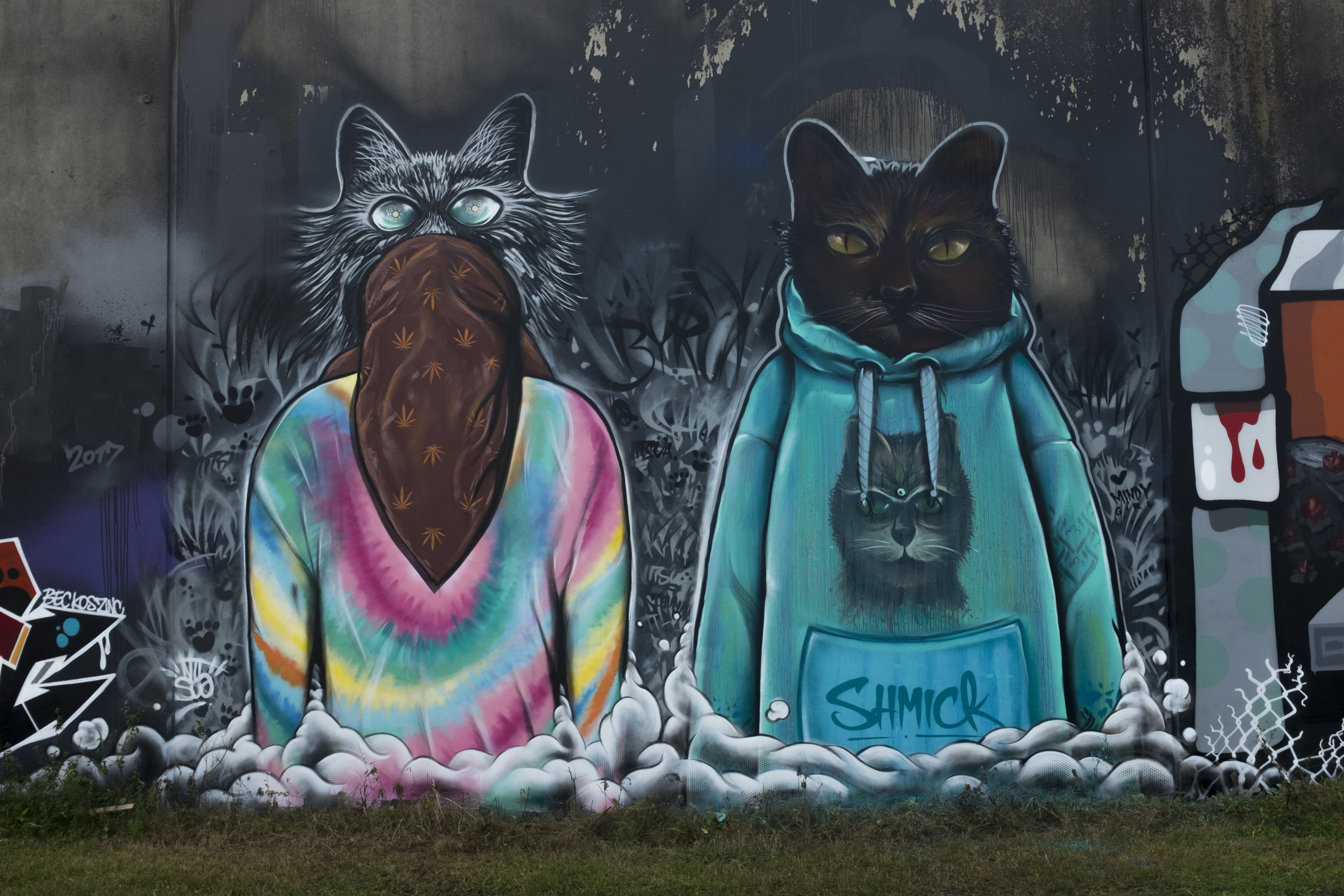 catsua colab with shmick