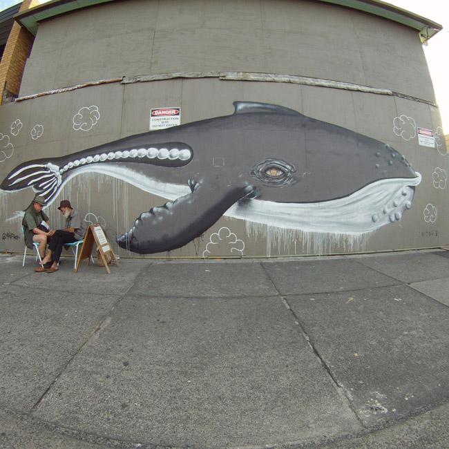makasua whale | Byron Bay