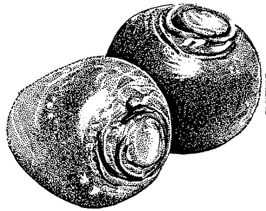 V0250C Purple Top White Globe (Pre 1880 )