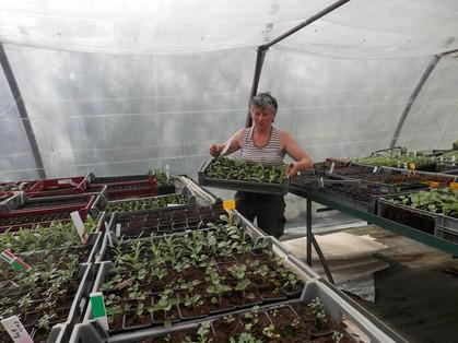 Christine à la serre des plants bios des Jardins Rocambole