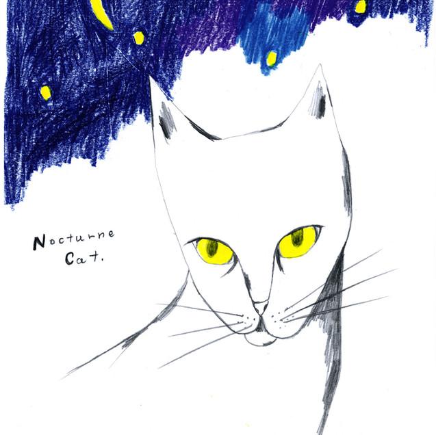 Nocturn Cat