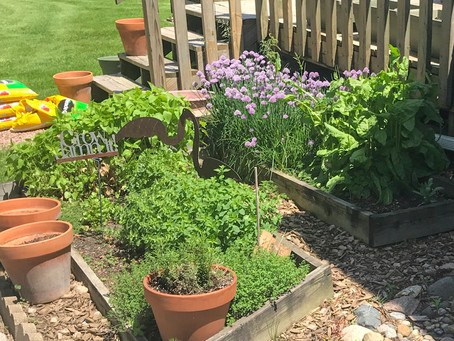 Growing herbs in Iowa