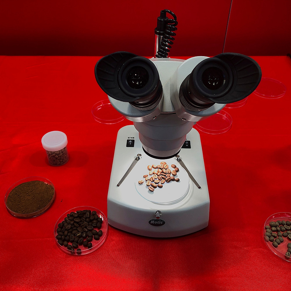 A microscope with a sample of coffee on the microscope platform, with several other coffee samples in small dishes placed around the base of the microscope