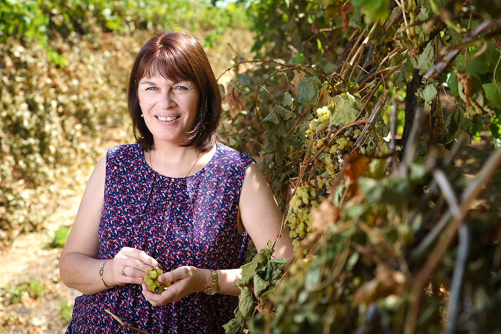 Woman holding grapes, standing beside grape vines.