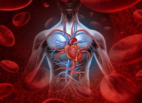 Coming Full Circle:  Happiness is a Well-Functioning Circulatory System!