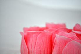 Rose Soaks