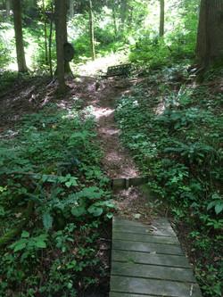 trail 11