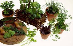 Fresh Herbs and Nutrition supplements
