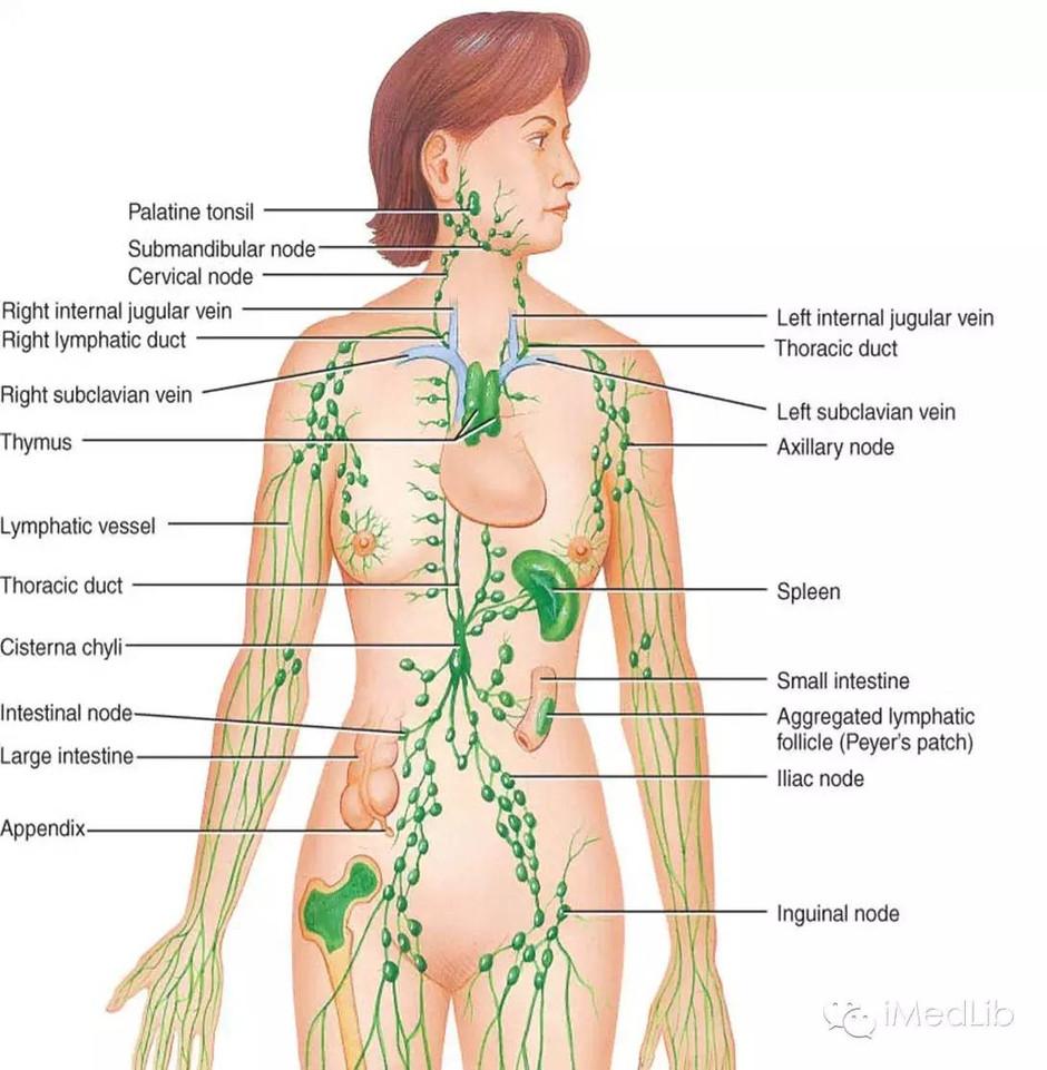 Alternative preventive treatments for Detoxify
