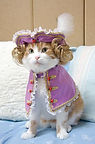 Japanese Cat Prin (2007)