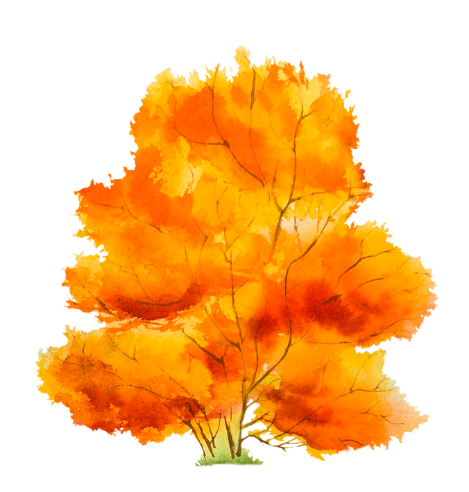 kisspng-autumn-tree-petal-5afa851f76ceb4.6739873615263675194866.png