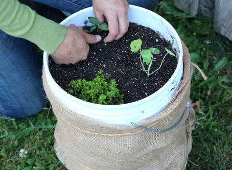 A month of free compost!