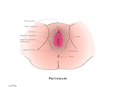 What's normal for our pelvic health approaching and through the menopause?