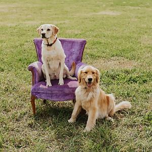Purple Chair Day
