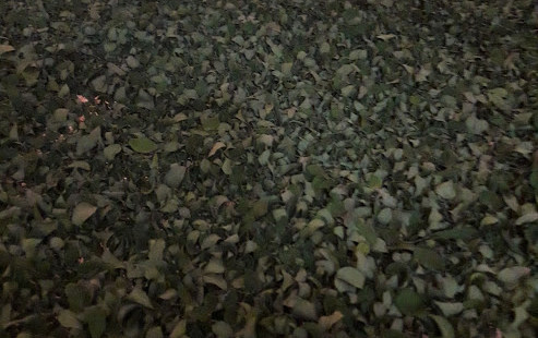 Leaves drying process