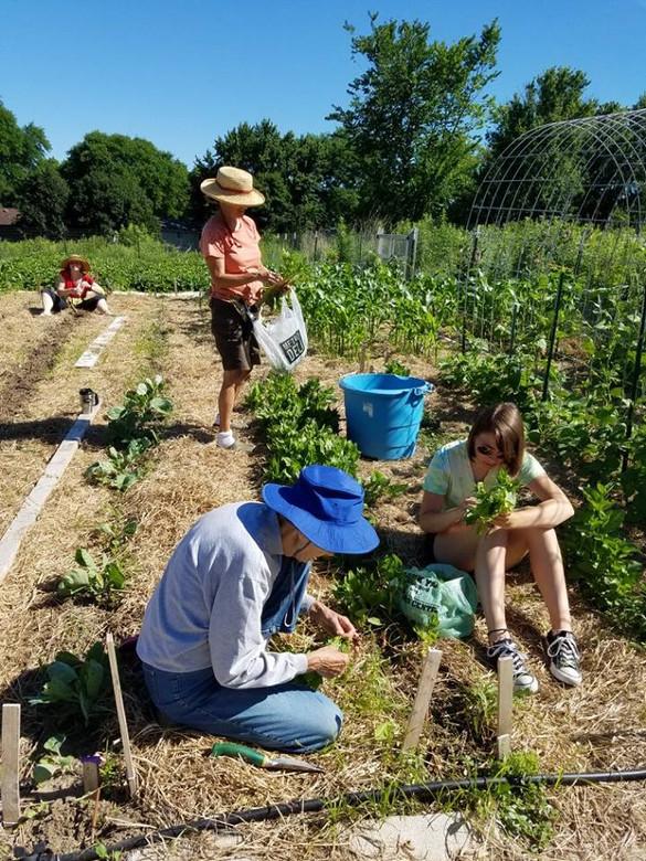 Garden intern.jpg