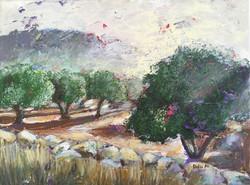 A71-Olive Orchard Sunrise