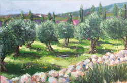 A66-Olive Grove