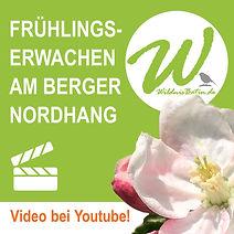 YouTube Film zum Frühlingserwachen am Berger Nordhang in Frankfurt am Main