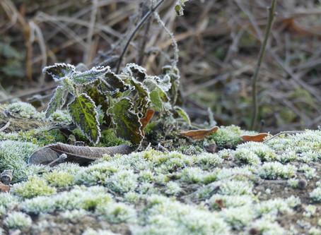 Feenzauber über der Winterlandschaft