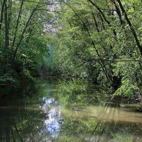 Die Nidda - der befreite Fluss
