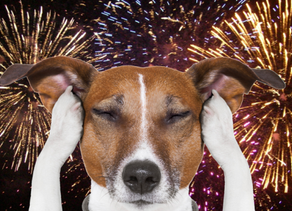 KEEPING DOGS CALM DURING FIREWORKS