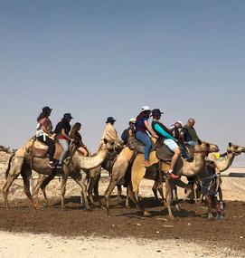 Passeio de Camelo, Israel.