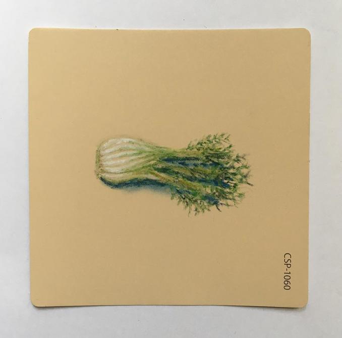Fennel Pastel on Martha Stewart Paint chips