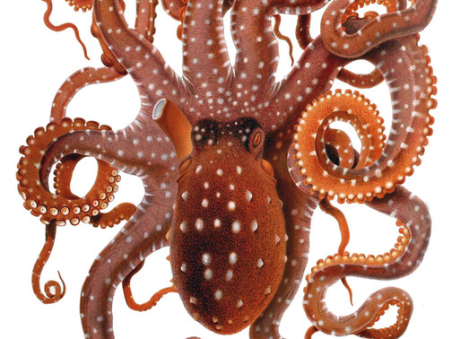 Octomom and My Friend, Joann.