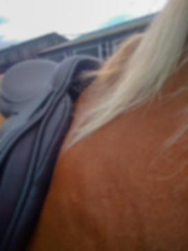 Photos for a Saddle Adjustment. 1) Saddle girthed firmly with no pad underneath, camera in next to horse's neck, try and avoid shadows under the front of the saddle if possible.
