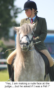 AH Saddles Photo Competition Winner