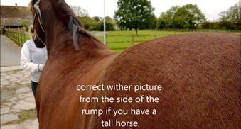 AH Saddles wither picture for saddle fitting example 3