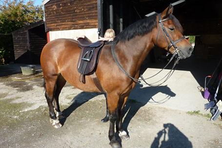 check for saddle pivoting